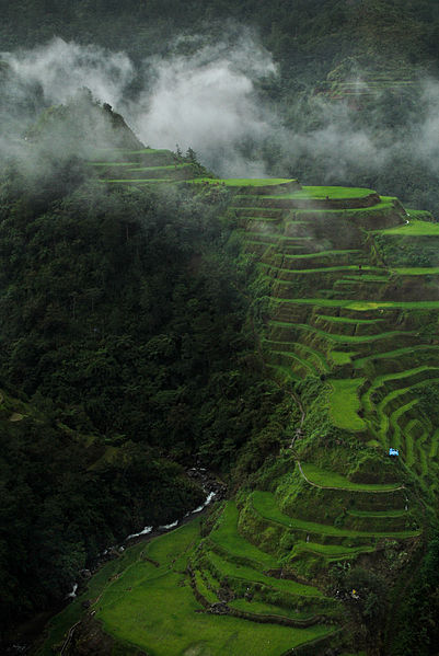 401px-Foggy_Ifugao_Rice_Terraces